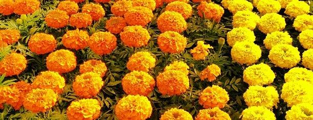 CWB - Floriculturas
