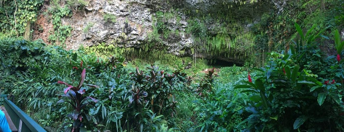 Fern Grotto is one of Ebi: сохраненные места.