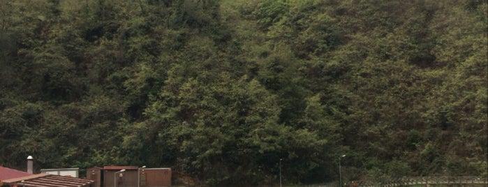 Sera Gölü Tabiat Parkı is one of สถานที่ที่ Müzeyyen ถูกใจ.