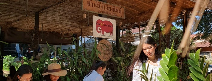 """Han """"Thueng"""" Chiang Mai is one of Thailand."""