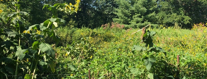 Butterfly Meadow is one of Prospect Park.