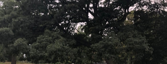 White Oak (Quercus alba) is one of Prospect Park.