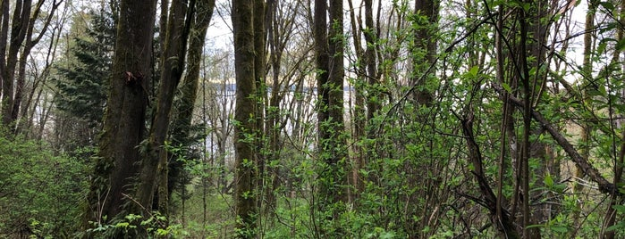Pipers Creek Natural Area is one of Seattle's 400+ Parks [Part 1].