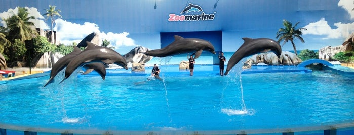 Zoomarine Dolphin Stadium is one of Portugal.