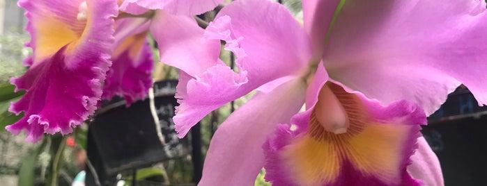 Jardin de orquideas 🌷 is one of MEXICO CITY.