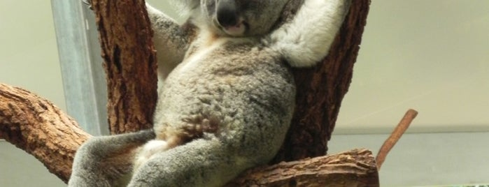 Lone Pine Koala Sanctuary is one of Go back to explore: Brisbane Area.