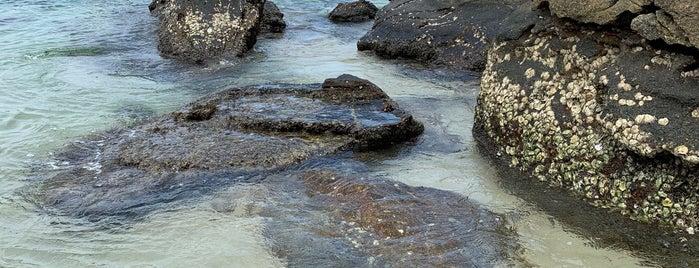 Praia do Pelado is one of Locais curtidos por Heloisa.