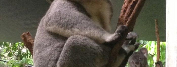 Koala Park Sanctuary is one of Sydney.