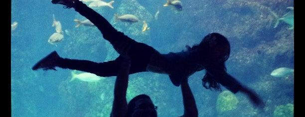 Downtown Aquarium is one of Denver's Best Entertainment - 2013.