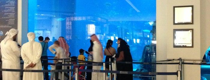 Dubai Aquarium is one of Abu Dhabi & Dubai, United Arab emirates.