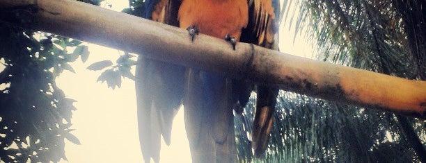 Zoobotânico Brusque is one of Orte, die Luis Gustavo gefallen.