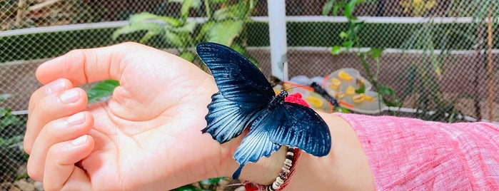 Dubai Butterfly Garden حديقة دبي للفراشات is one of Kids In UAE.
