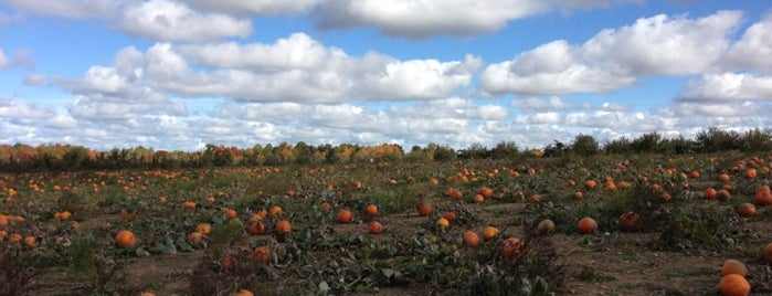 Hillcrest Orchards is one of สถานที่ที่ Maya ถูกใจ.