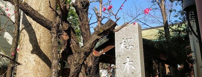 櫻木神社 (櫻木天神) is one of 神輿で訪れた場所-1.