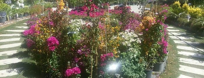 Dalyan Botanik Peyzaj is one of www.bodrumania.com.