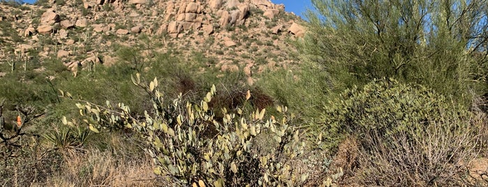 Pinnacle Peak Mountain is one of Phoenix.