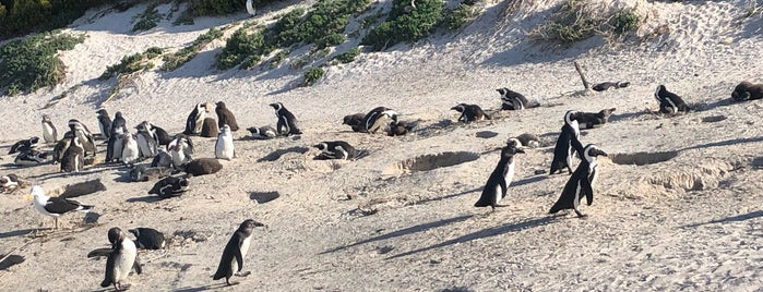 Boulders Beach Penguin Colony is one of Locais curtidos por Jadiânia.