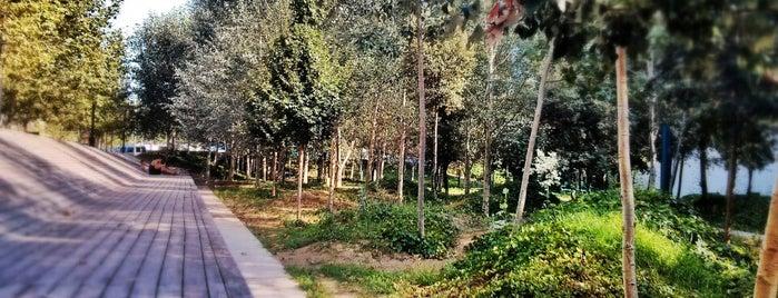 Jardins Miquel Marti i Pol is one of Ruta a Sant Martí. La ruta verda.