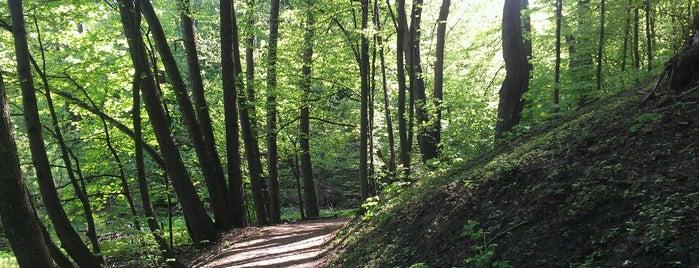 Парк «Дубки» / Сирецький гай is one of Samet 님이 좋아한 장소.