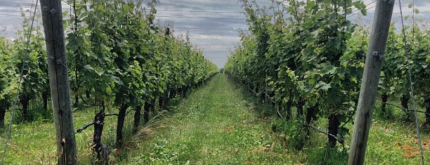 Shinn Estate Vineyard is one of LI Wine.