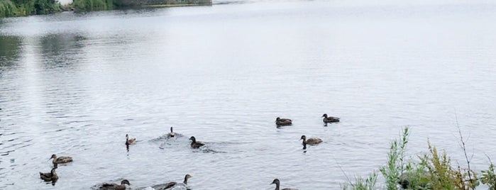 Duddingston Loch is one of Squaw✌👣👻✈: сохраненные места.