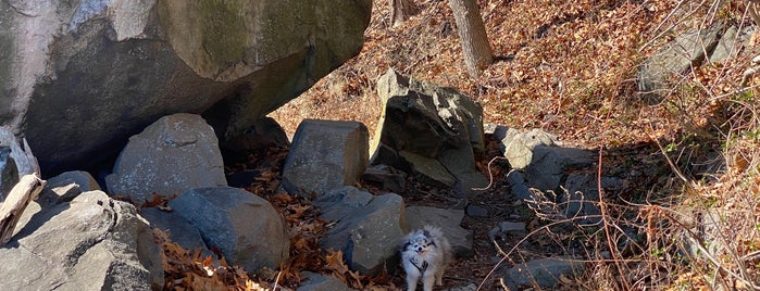 Shore Trail - Palisades Interstate Park is one of Locais curtidos por Michael.