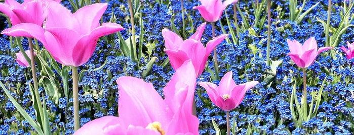 Royal Botanic Gardens is one of London Favorites.