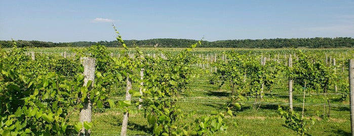 LedgeStone Vineyards (and Gnarly Cedar Brewing) is one of Wisconsin Wineries.