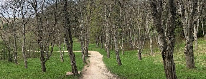 Первомайская поляна @ Курортный парк is one of Orte, die Женя gefallen.