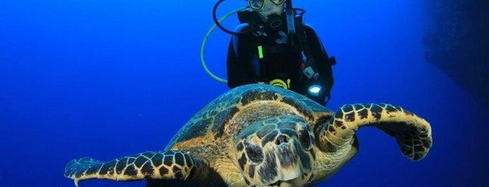 Amigos Del Mar Dive Shop is one of Belize.
