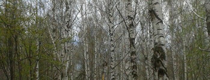 Хохряковское кладбище is one of Posti che sono piaciuti a AE.