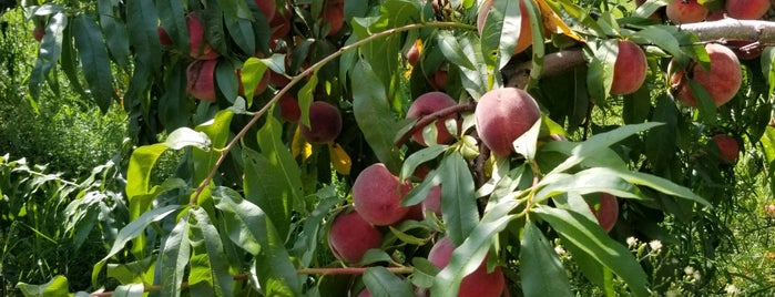 Wickham's Fruit Farm is one of North Fork.