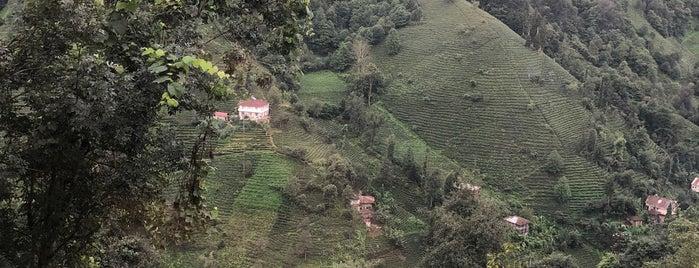 kömürcüler köyü, rize is one of Ömer : понравившиеся места.
