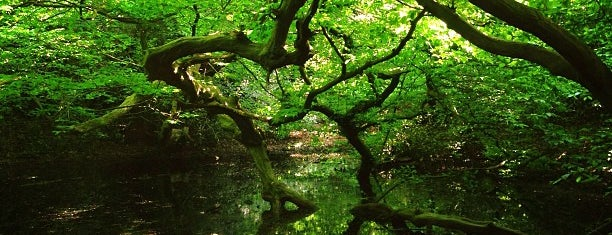 Epping Forest is one of Ancient woodland in London.