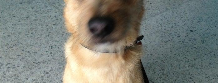Puppy Wash is one of Posti che sono piaciuti a Abel A..