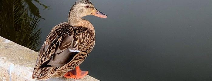 Andree Clark Bird Refuge is one of Santa Barbara.