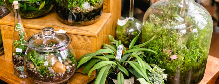 Roosevelt's Terrariums is one of Lugares favoritos de Allison.