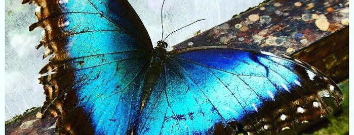 Butterfly House is one of สถานที่ที่บันทึกไว้ของ Noel.