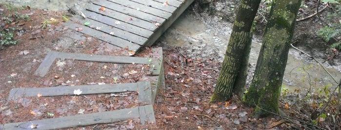 Stroudwater Trail is one of Posti che sono piaciuti a Dana.