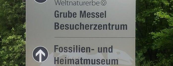 Grube Messel   Messel Pit is one of Orte, die Roger gefallen.