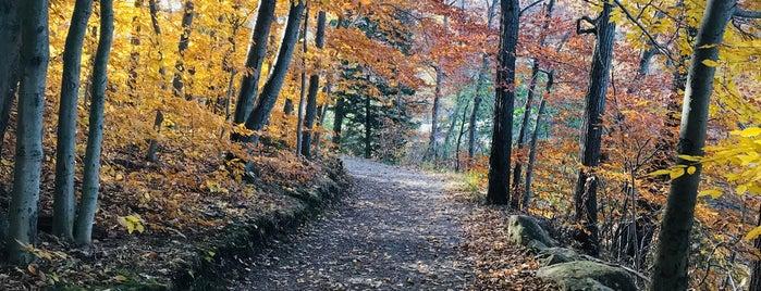 Schooley's Mountain Park is one of Lieux sauvegardés par Neil.