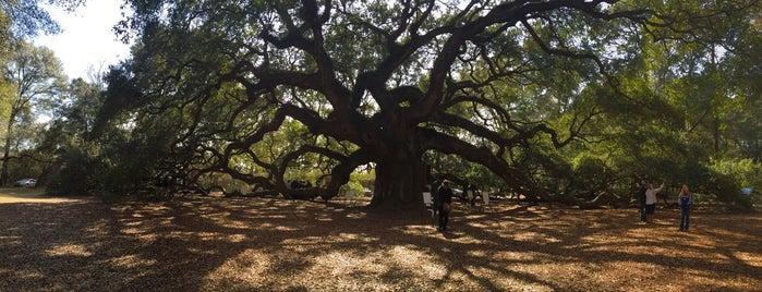 Angel Oak Tree is one of Tempat yang Disukai Ilse.