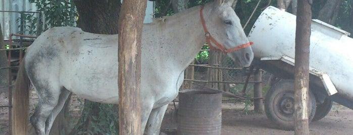 Sayta Horses is one of Tobi : понравившиеся места.