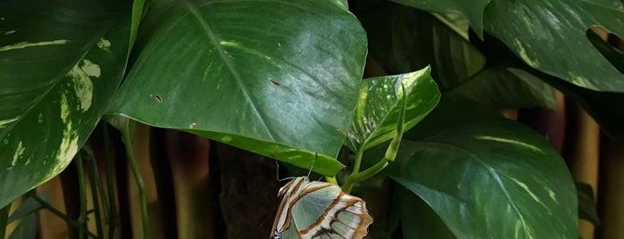 Dubai Butterfly Garden حديقة دبي للفراشات is one of สถานที่ที่ PINAR ถูกใจ.