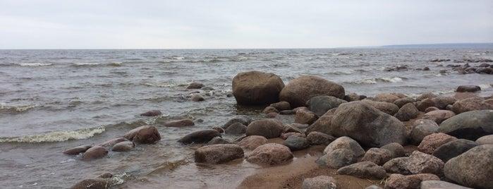 Дорожка Сестрорецк — Смолячково is one of Сестрорецк и побережье Финского залива.