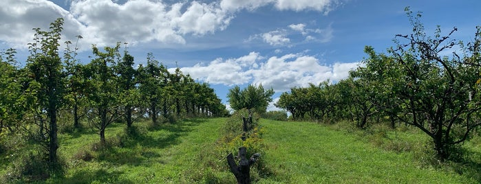 Stone Ridge Orchard is one of Picking Vegs and fruit - summer and fall.