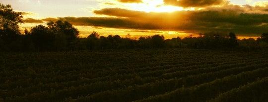 Sannino Bella Vita Vineyard is one of North Fork Wine Trail.