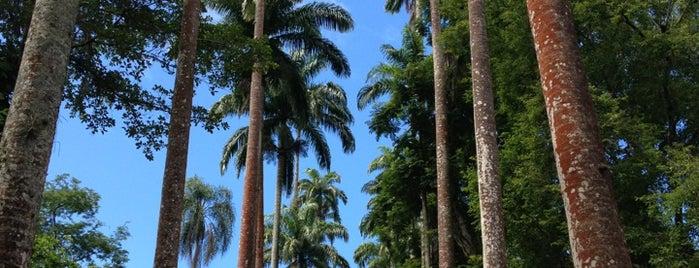 Jardín Botánico de Río de Janeiro is one of Adoro.