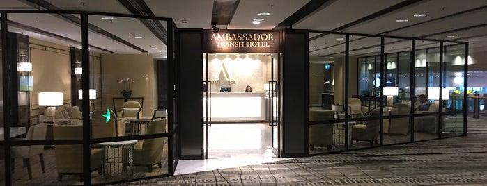 Ambassador Transit Hotel is one of Singapore and HongKong Holiday 2016.