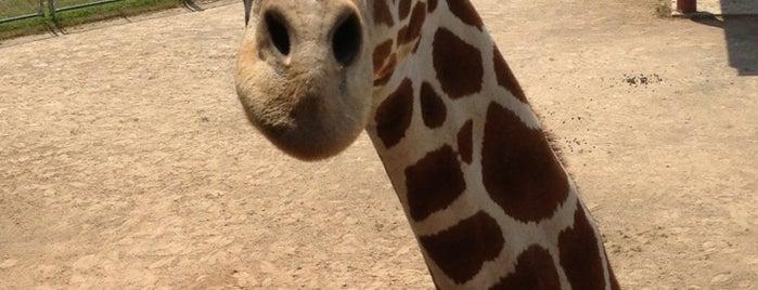 New Zoo is one of Lieux qui ont plu à Sharifa.